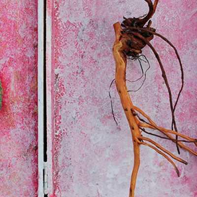 Objekt aus Rosenwurzel